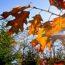 Jesienny ogród :)